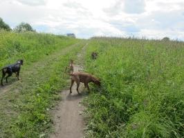 Прогулка в полях